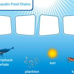 NOAA SEA games - Aquatic Food Chain