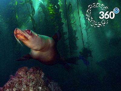 Virtual Dives - 360VR - NOAA National Marine Sanctuaries