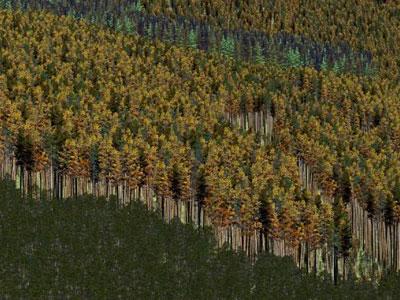 Brent Chamberlain - VR Forest Pine Beetle